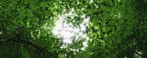 cropped-tree-corder-euphoria1.jpg