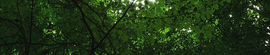 cropped-tree-corder-euphoria2.jpg
